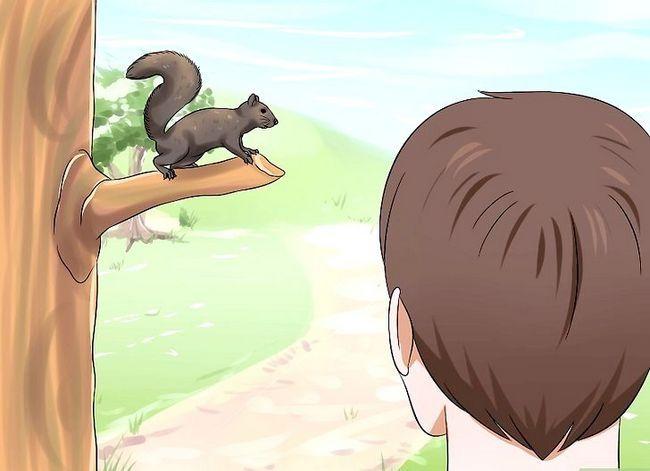 एक बच्चा गिलहरी कैसे बढ़ाएं