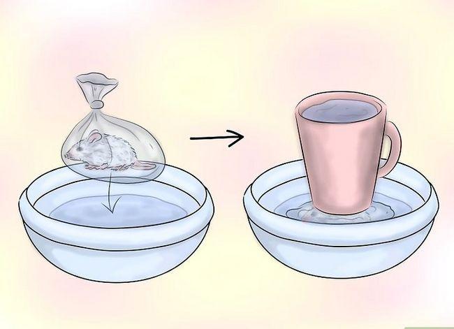 साँप को जमे हुए भोजन कैसे देना चाहिए