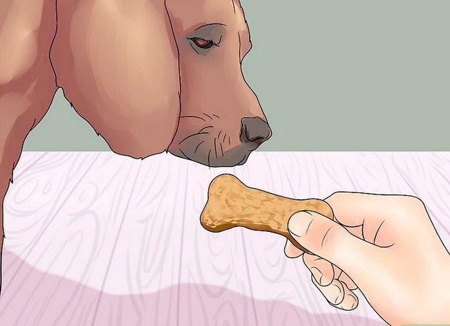 कैसे पैर देने के लिए अपने कुत्ते को पढ़ाने के लिए