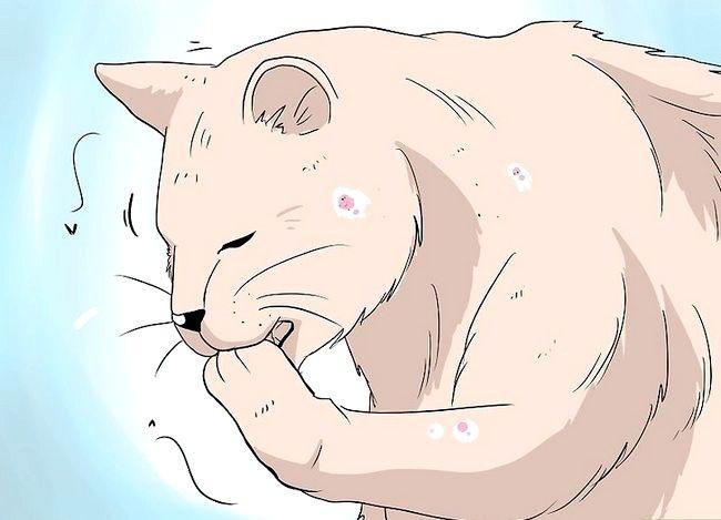 कैसे बिल्लियों में बालों के झड़ने से निपटने के लिए