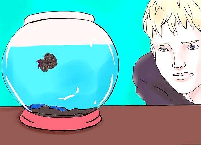 बीटा मछली की मछली के टैंक को कैसे साफ करें