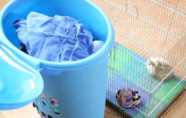 गर्म दिन पर अपने गिनी पिग को कैसे शांत रखना