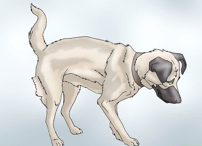 कुत्तों में हिप डिस्प्लासिआ के लक्षण पहचानने के तरीके