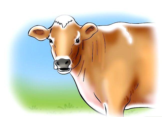 यह कैसे पता चलेगा कि जब गाय या गाढ़ा गर्मी में है