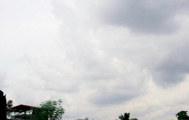 छवि ड्राय मशरूम शीर्षक चरण 11