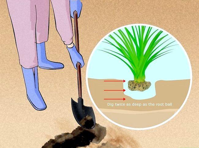 सजावटी पौधे लगाने के लिए कैसे करें