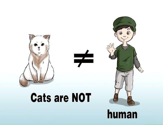 कैसे बिल्लियों की महिला बनने के बिना बिल्लियों कैसे हो?