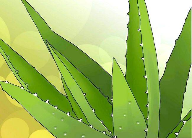 एक धूप की कालिमा के इलाज के लिए मुसब्बर वेरा क्यूब्स का उपयोग कैसे करें